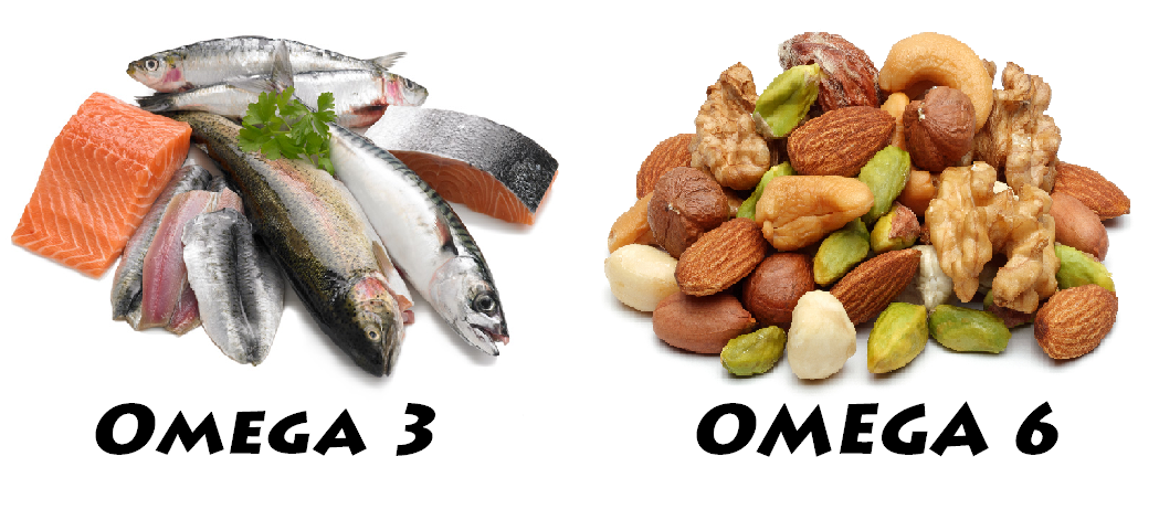 Best Omega  Foods For Dogs